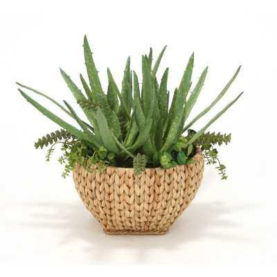 Aloe Desk Top Plant in Basket - Wayfair