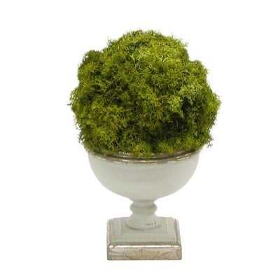 Ball Moss Topiary in Urn - Wayfair