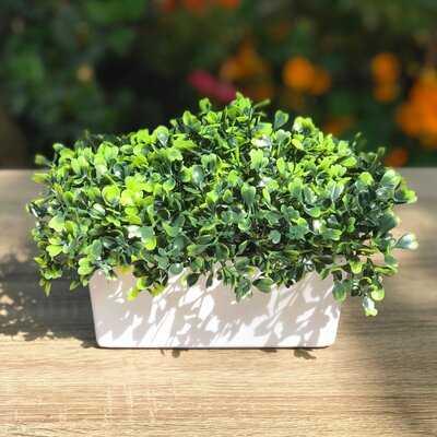 Artificial Grass Boxwood Plant in Decorative Vase - Wayfair