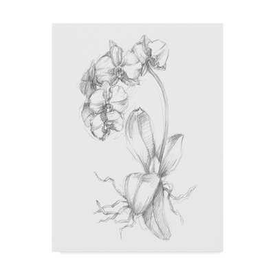 'Botanical Sketch V' Drawing Print on Wrapped Canvas - Wayfair