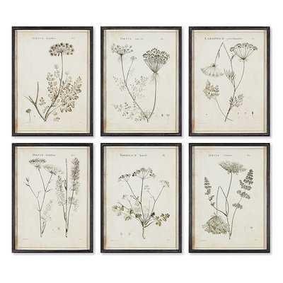 'Wild Flower' 6 Piece Framed Graphic Art Print Set - Birch Lane