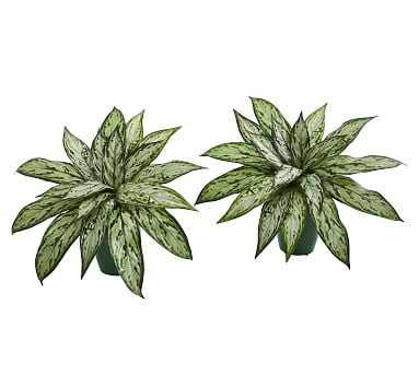 Silver Queen Faux Plant, Set of 2 - Pottery Barn