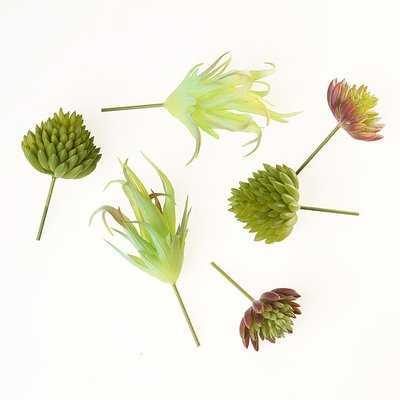 6 Piece Succulent Plant Set - Wayfair