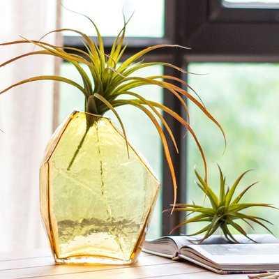 Gerst Rustic Various Hand Blown Glass Table vase - Wayfair