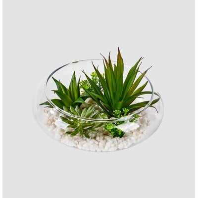 Dish Garden Agave Succulent - Wayfair