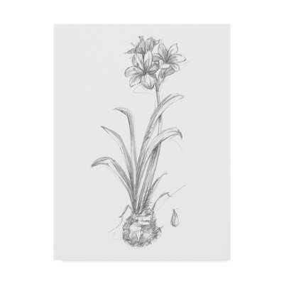 'Botanical Sketch II' Drawing Print on Wrapped Canvas - Wayfair