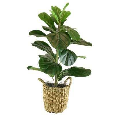 Fiddle Leaf Fig Tree in Basket - 30 inches high - Wayfair