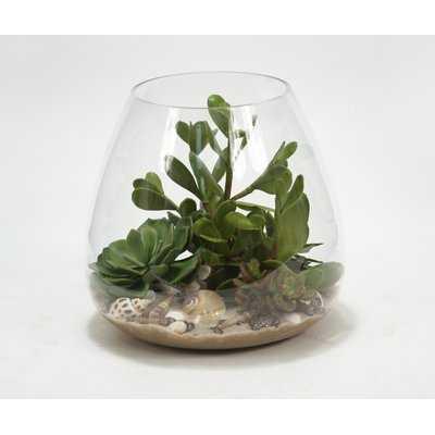 Succulents, Sand and Shells Desk Top Plant in Terrarium - Wayfair