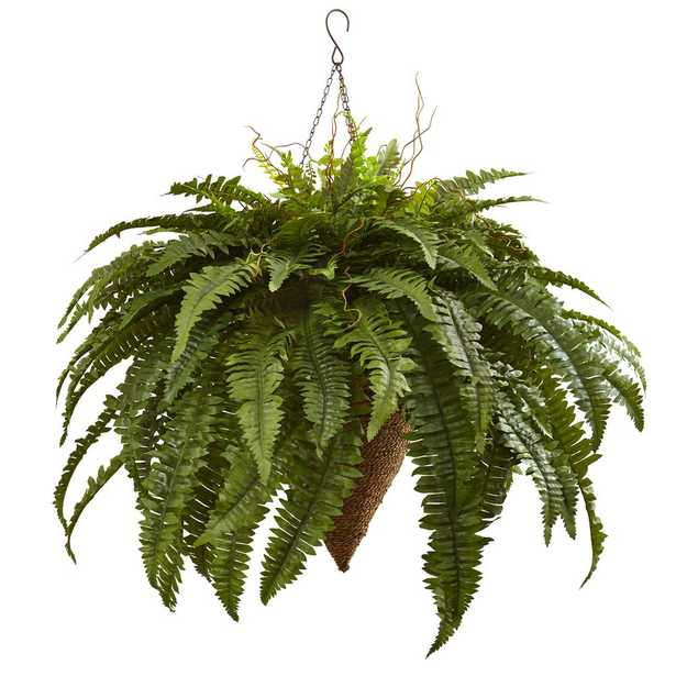Giant Boston Fern with Cone Hanging Basket - Home Depot