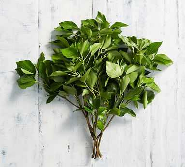 Live Bush Ivy Bunches - Pottery Barn