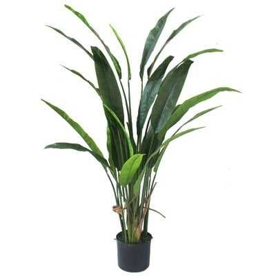 Bird of Paradise Silk Palm Plant in Pot - Wayfair