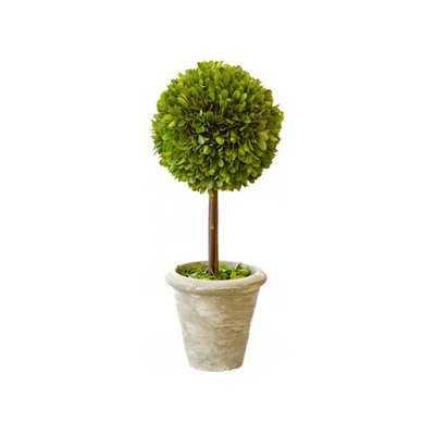 Single Boxwood Topiary in Pot (Set of 2) - Birch Lane