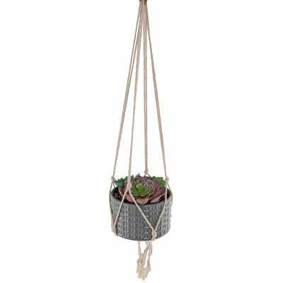 Hanging Succulent in Planter - AllModern