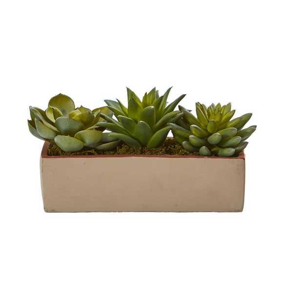 5 in. Indoor Mixed Succulent Pot - Home Depot