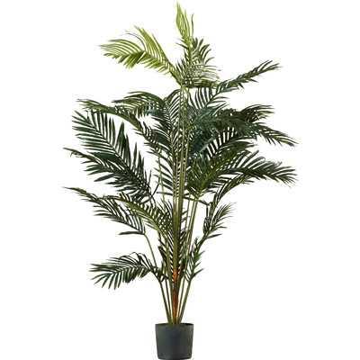 Paradise Palm Tree in Pot - Birch Lane
