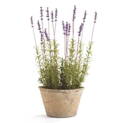 French Lavender Floral Arrangements in Pot - Birch Lane