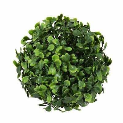 Mini Button Leaf Ball Foliage Plant (set of 4) - Wayfair