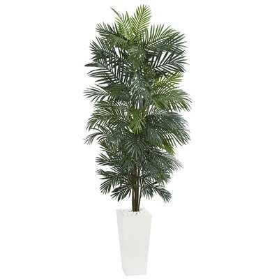Areca Floor Foliage Tree in Planter - Wayfair