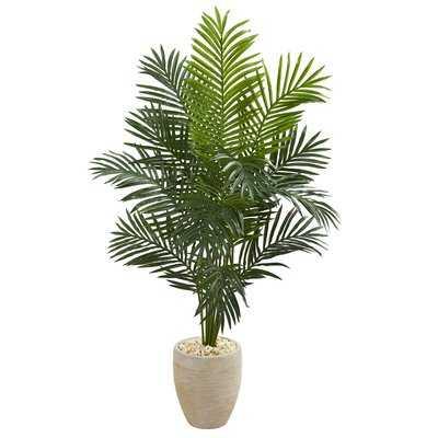 Paradise Floor Palm Tree in Planter - Wayfair