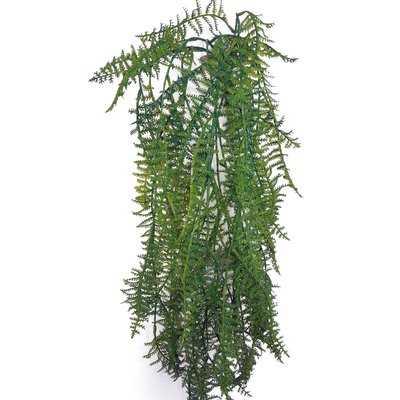 Plumosa Hanging Plant in Planter - AllModern