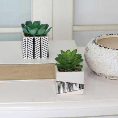 2 Piece Succulent Desktop Plant in Pot Set - Wayfair