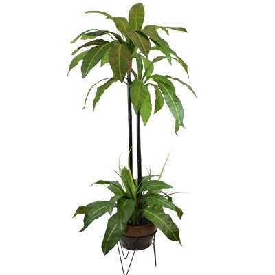 Palm Floor Palm Plant in Planter - Wayfair