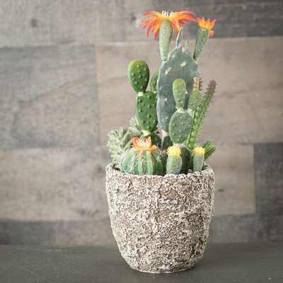 Cactus Succulent in Pot - Wayfair