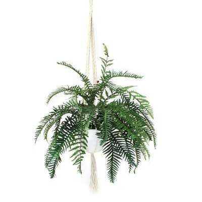 Hanging Fern Plant in Planter - Wayfair