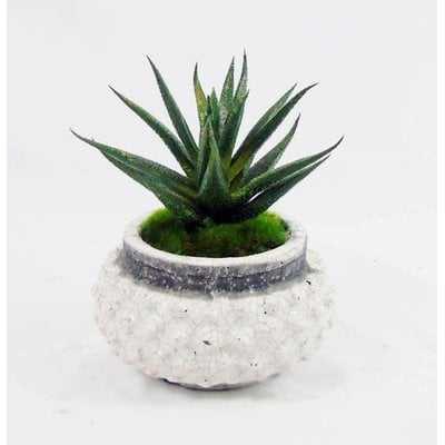 Mini Faux Agave Plant in Pot - Wayfair