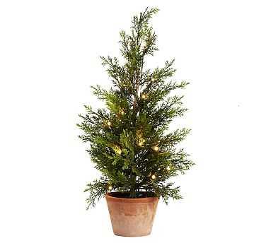 Lit Juniper Trees, Green - Small - Pottery Barn