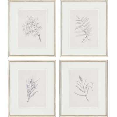'Foliage' Framed Graphic Art Set - Birch Lane
