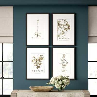 'Sepia Tone Botanical' Framed Graphic Art Print in White Gray - Wayfair