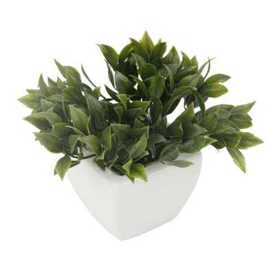 Boxwood Succulent in Pot - Wayfair