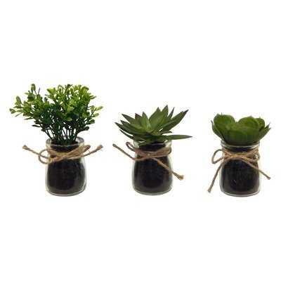 3 Piece Faux Succulent Plant in Jar Set - Wayfair