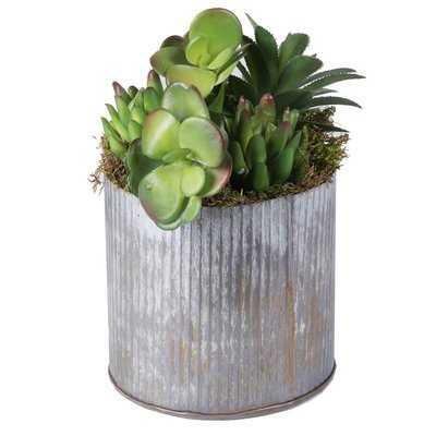 Succulents Plant in Pot - Wayfair