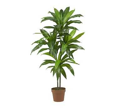 Faux Potted Dracaena Plant - Pottery Barn