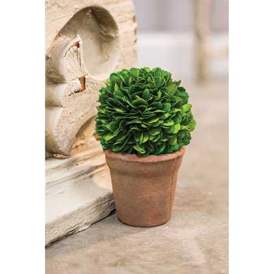 Desktop Boxwood Topiary in Pot Liner Liner - Birch Lane