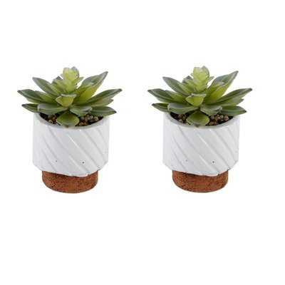 Desktop Succulent Plant in Pot - Wayfair