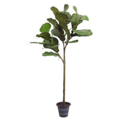 Fiddle Leaf Fig Tree in Planter - Wayfair