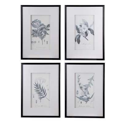 'Botanical' 4 Piece Framed Drawing Print Set - Wayfair