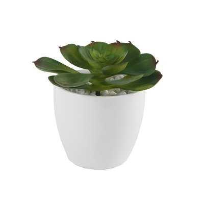 Echeveria Desktop Succulent Plant in Pot - Wayfair