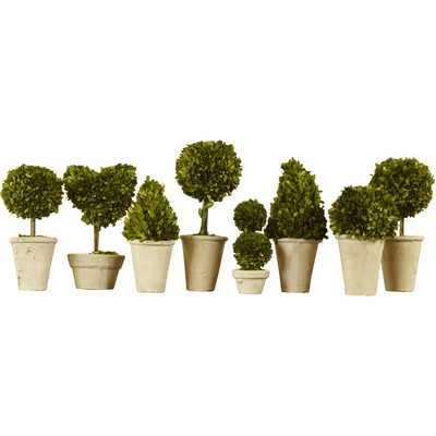 8 Piece Preserved Boxwood Topiary in Pot Set - Birch Lane