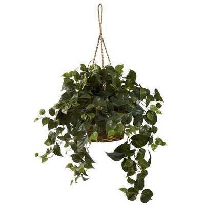 Philo Hanging Plant in Basket - Wayfair