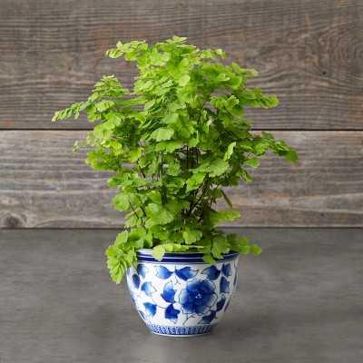 Blue & White Ceramic Mini Planter - Williams Sonoma