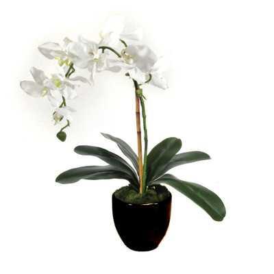 Orchid Centerpiece in Clay Planter - AllModern