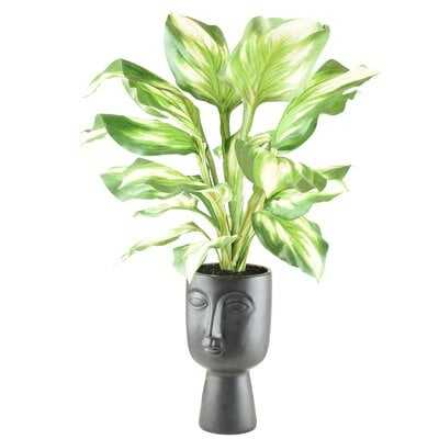 Hosta Plant in Decorative Vase - Wayfair