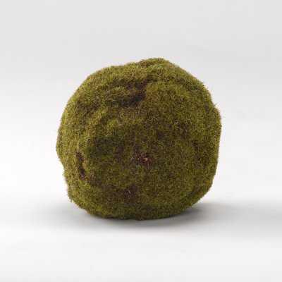 Crackled Moss Ball Plant (Set of 3) - Wayfair