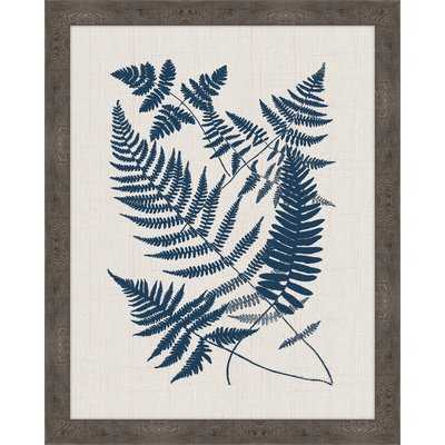 'Buckler Ferns' Framed Graphic Art Print - Wayfair