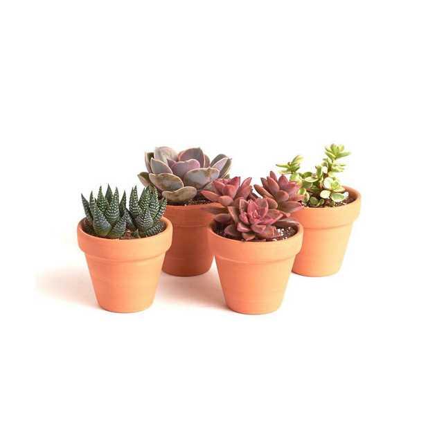 Shop Succulents Terracotta Succulent (4-Pack) - Home Depot