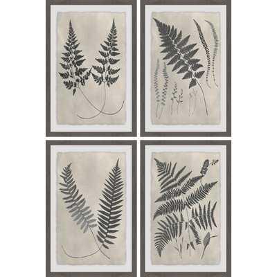 'Vintage Fern Study III Quadriptych' 4 Piece Framed Graphic Art Print Set - Wayfair